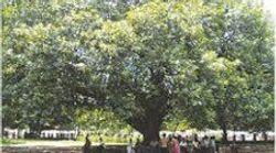 A Tree Called 'Kennedy': Happy 40th Birthday