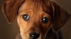 This Holiday Season Boycott Puppy