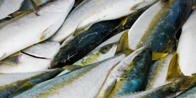 Canada Fisheries Act Changes Could Harm Fish Habitat: