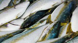 Feds Harming Fish