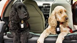 Quick Study: Travelling With Pets Safely