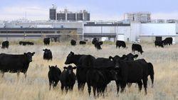 XL Foods Breaks Beef Recall