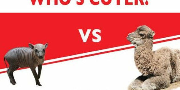 Toronto Zoo Cute Fight: Which Baby Animal Wins Your Love And