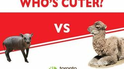 Toronto Zoo's Cute