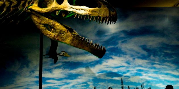 ROM Dinosaur Exhibit Show 'The Most Unusual Dinosaurs That Ever