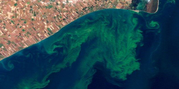 Algae Blooms On Lake Erie Getting 'Difficult To