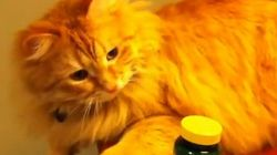 Teddy The Cat Has