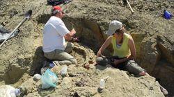 Huge Dinosaur Fossil In