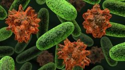 Doctors Warn Of Long-Term Effects From E. Coli