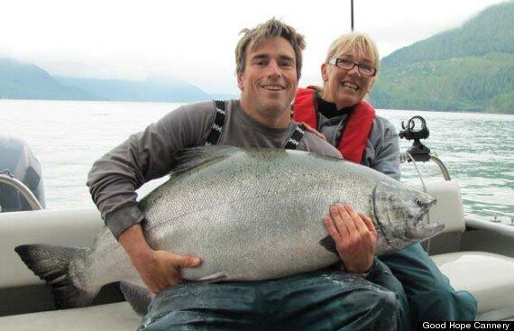 Record-Breaking Salmon: Catch And Release In BC Rivers Inlet