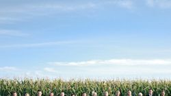A Real Wedding With Cornfields, Apple Tree And A Lot Of