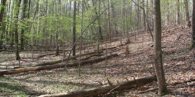 Sino-Forest Investigation Launched By Ontario Securities Commission Over Firm's China Forestry