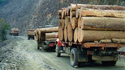 Sino-Forest's Largest Stakeholder Bails
