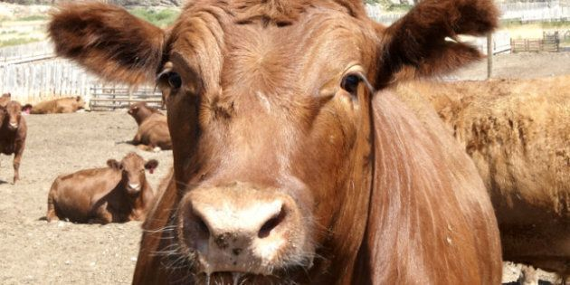 Canadian Beef Exports Headed Back To South Korea