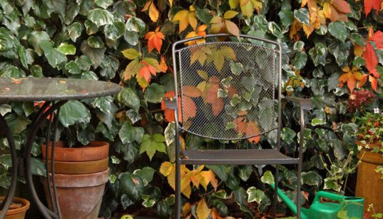 Autumn Gardening: Expert Tips For The Perfect Fall