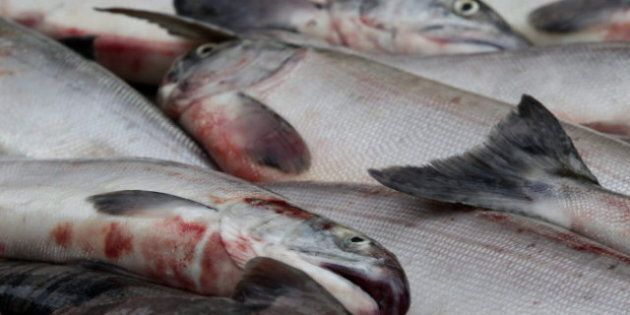 B.C. Salmon: Deadly Virus Not Yet Confirmed By