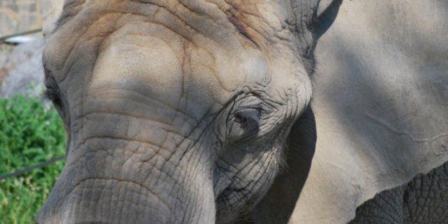 Zoo Elephants Deserve a Second Lease on
