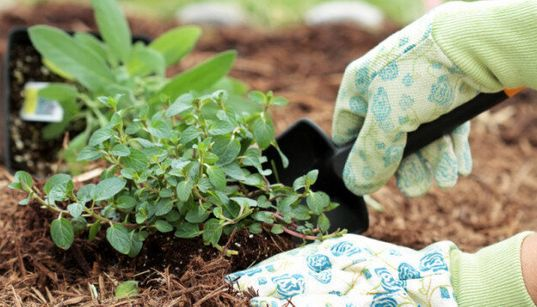 Weeds: If You're Sure They Have To Go, Save Yourself Some Time And Back