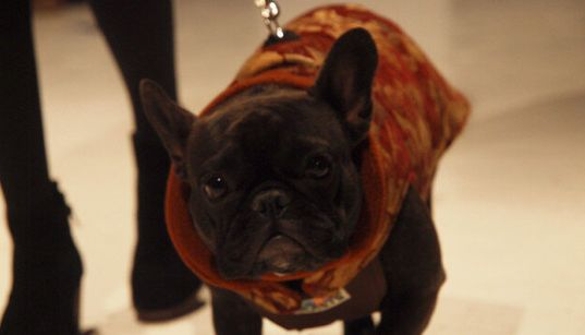 Dogs Strut The Catwalk In Couture Clothes For Charity