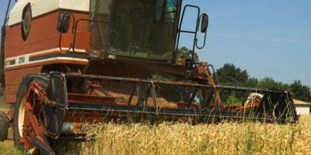 Western Canadian Wheat Growers Counter Sue Wheat