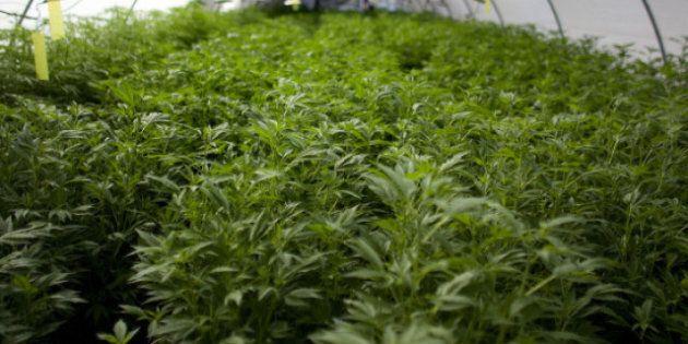 Legalize Marijuana Sales Say B.C.