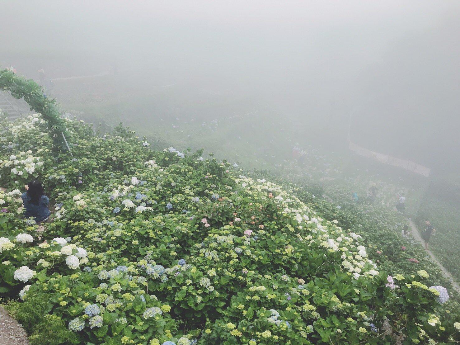 從最高處慢慢下梯田賞花、拍照。