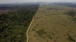 Foreste, ecosistemi a rischio: l'allarme dai