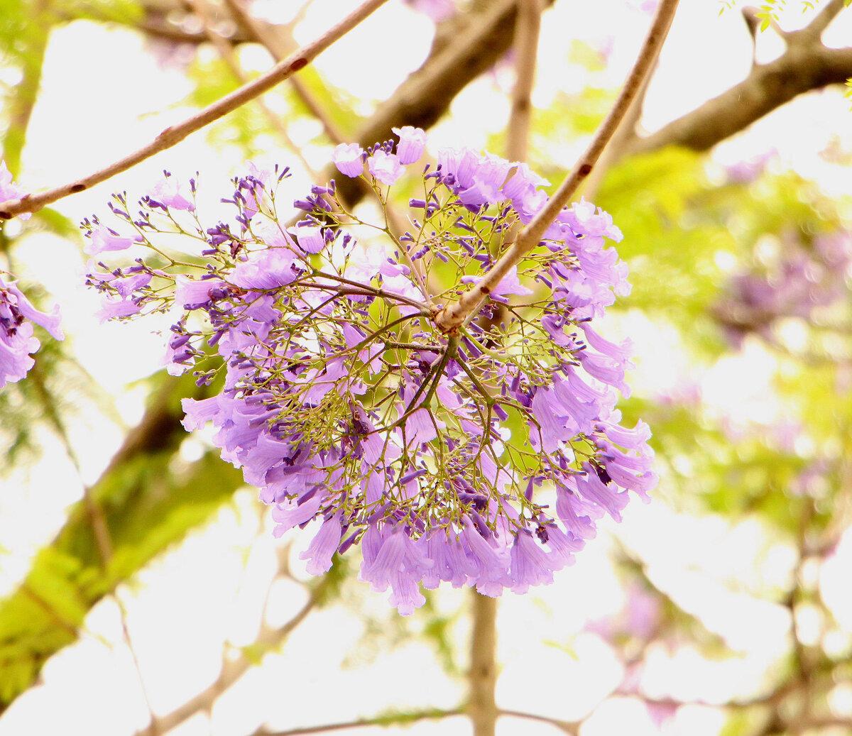 串串藍紫色小花 (圖片來源:台北市政府工務局)