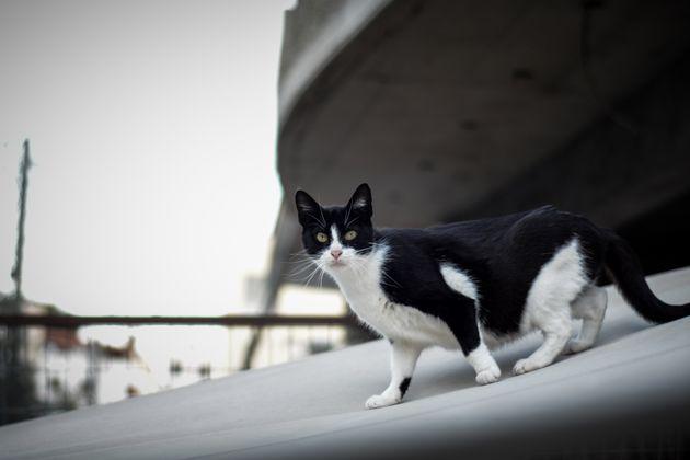 Οι γάτες της Αθήνας είναι παντού - και τις αγαπάμε