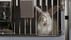Help the #BeCrueltyFree Campaign End Cosmetics Animal