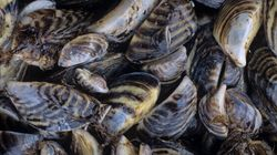 How One Little Mussel Changed the Great Lakes