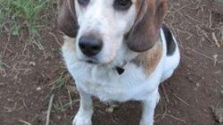 Adopt-a-HuffPet: Sweet Wilbur Needs a