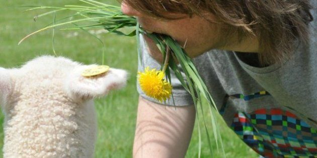 Sheep Thrills: An Unusual Animal