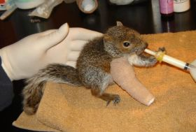 The Injured Wildlife Saved By Mother/Daughter