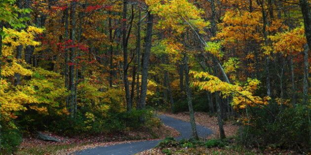 description 1 Fall Foliage wv Winding Country Road | date 2009-10-12 | source http://www. forestwander....