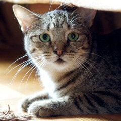 Adopt-a-HuffPet: Lucy the Wobbly Kitty Needs Your