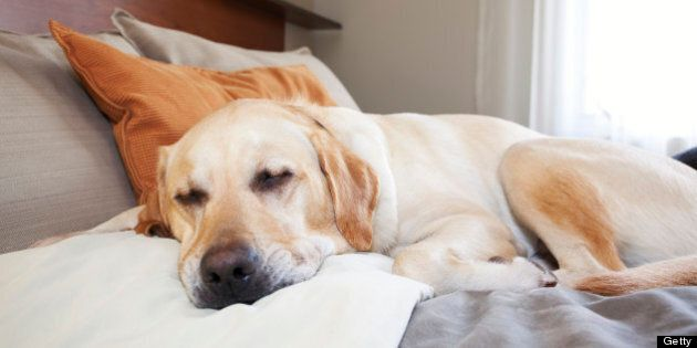 Dog-Friendly Hotels Catering To More Pet Owners With Special