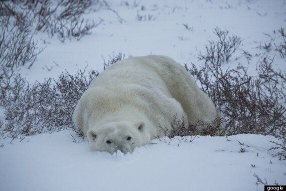 Churchill, Manitoba, Canada's Polar Bear Capital, As Seen From Google
