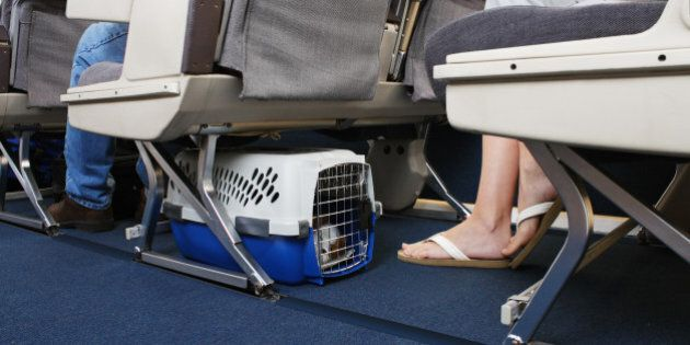 Passenger traveling with their pet dog. Pet carrier is stowed under the