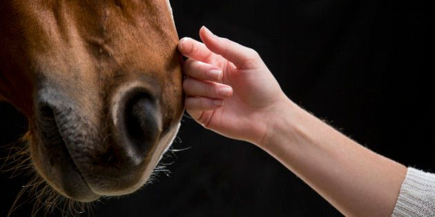 Close-up of woman's hand touching horse against black background.