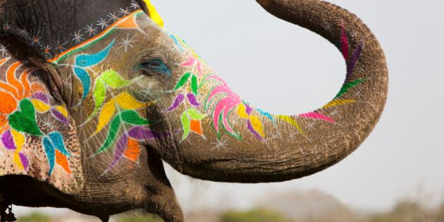 Decorated elephant at the annual elephant festival in Jaipur, Rajasthan in