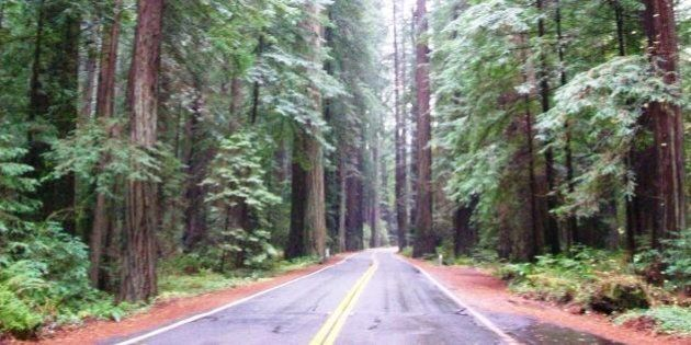 Avenue of the Giants, Humboldt County. This is also a paradise for anyone who loves those cheap little...