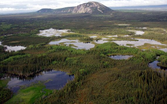 Progress In Canada's Boreal Forest Shows We Can Protect Half Of