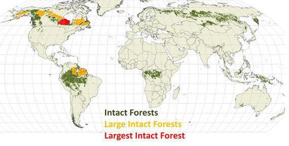 Why Do Forests Matter? A Call to Conserve the Last Great