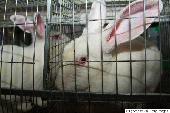Enough Is Enough. It's Time Consumers Stood Up To Animal