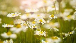 Think Spring: 9 Stunning Springtime