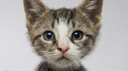 WATCH: Kittens Play Football, Cuteness