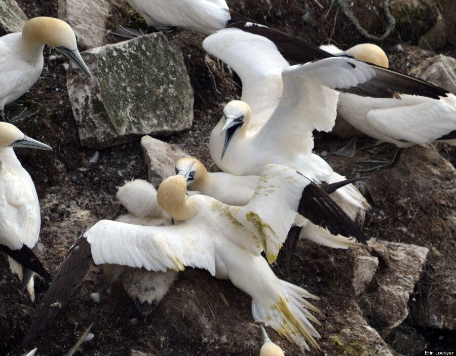 Cape St. Mary's Sea Bird Ecological Reserve Is A Roaming Bird Lover's Dream