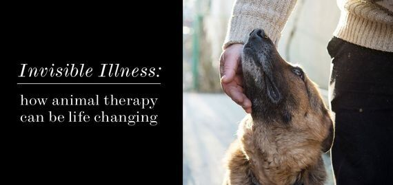How Animal Therapy Can Change