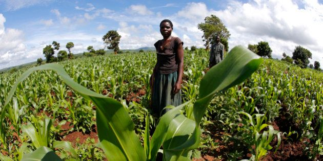 Malawian subsistence farmer tend their fields near the capital Lilongwe, Malawi February 1,  2016. Late rains in Malawi threaten the staple maize crop and have pushed prices to record highs. About 14 million people face hunger in Southern Africa because of a drought that has been exacerbated by an El Nino weather pattern, according to the United Nations World Food Programme (WFP). Picture taken with fish eye lens. REUTERS/Mike Hutchings